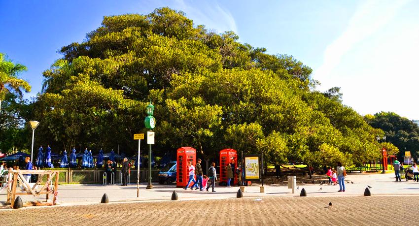 Árvore mais antiga de Buenos Aires